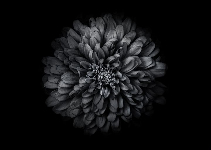 Black And White Flowers 68 - The Learning Curve Photography