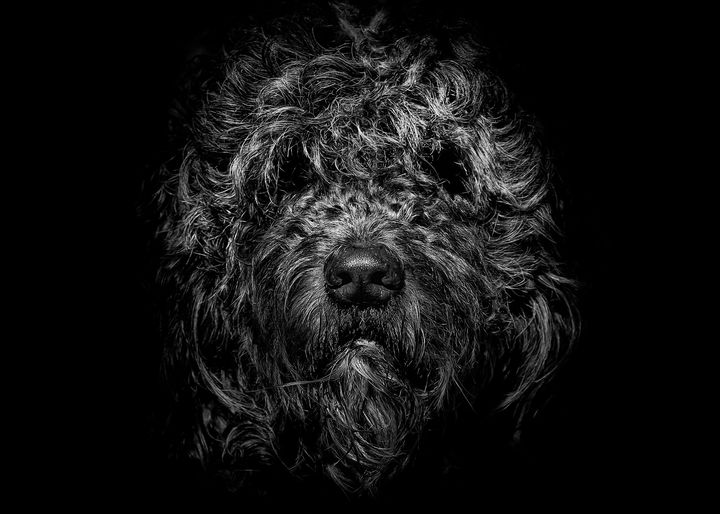 Ziggy Portrait No 1 - The Learning Curve Photography