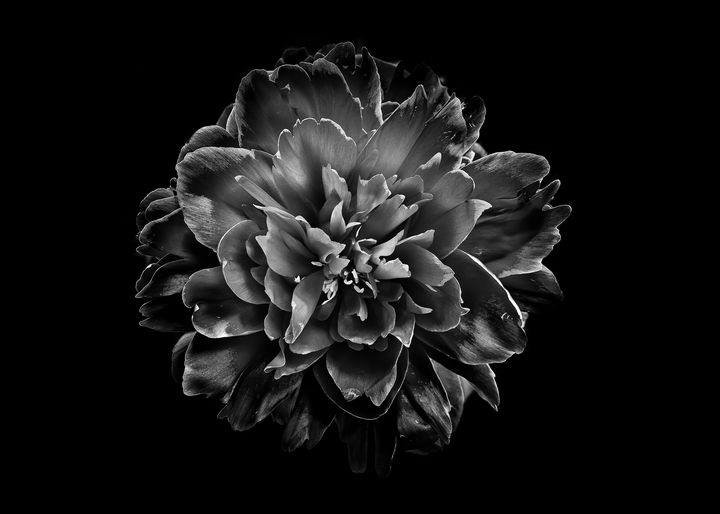 Black And White Flowers 55 - The Learning Curve Photography