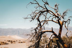 Tree branch in the sand desert