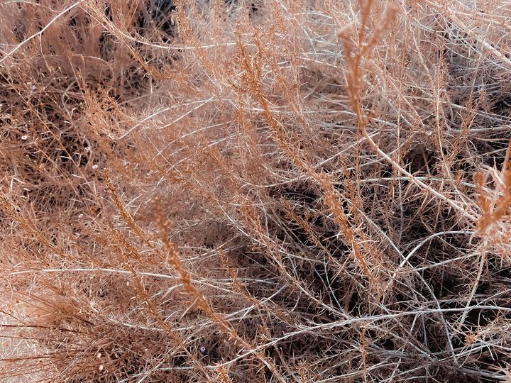 Closeup brown dry plant abstract - TimmyLA