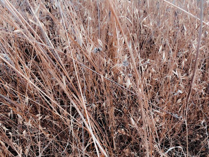 dry brown grass field texture - TimmyLA