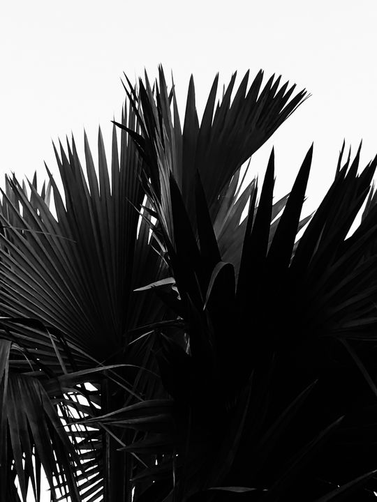 palm leaves texture abstract - TimmyLA
