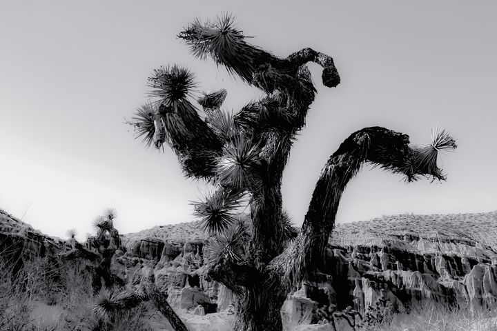 cactus in the desert at Red Rock - TimmyLA