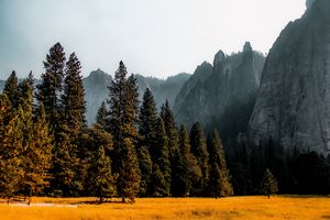 Mountains with pine tree at Yosemite