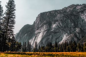 mountain with pine tree at Yosemite