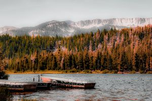 Boat on the lake with pine tree