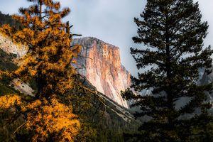 Mountains with autumn tree Yosemite