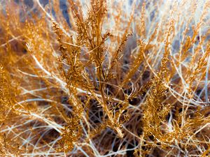 closeup dry brown grass texture