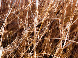 dry brown grass field texture