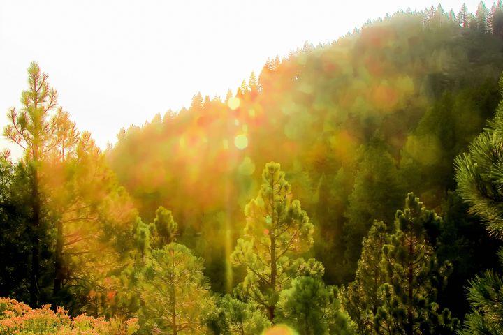 green pine tree background - TimmyLA