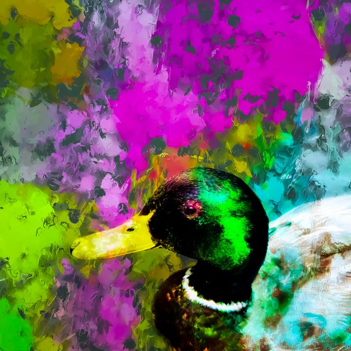 mallard duck with colorful abstract - TimmyLA