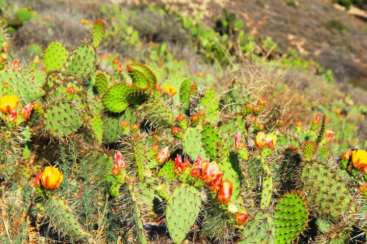 green cactus with flowers - TimmyLA