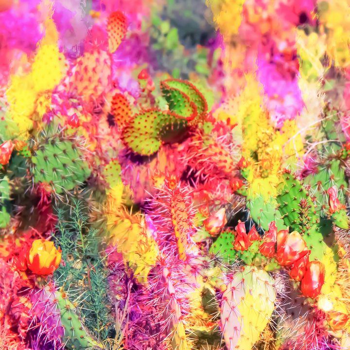 colorful cactus - TimmyLA