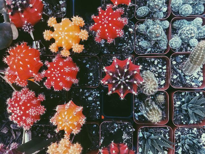 cactus garden - TimmyLA