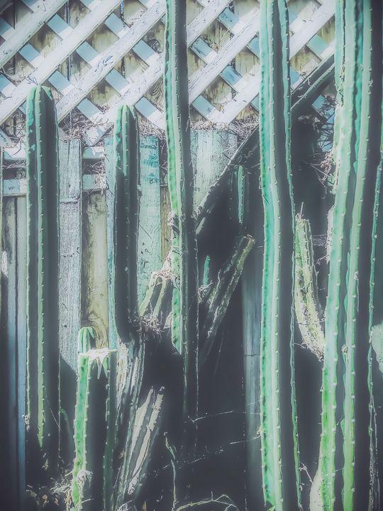 green cactus garden - TimmyLA