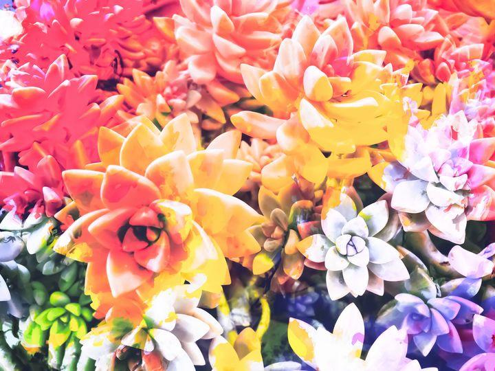 colorful succulent plant - TimmyLA