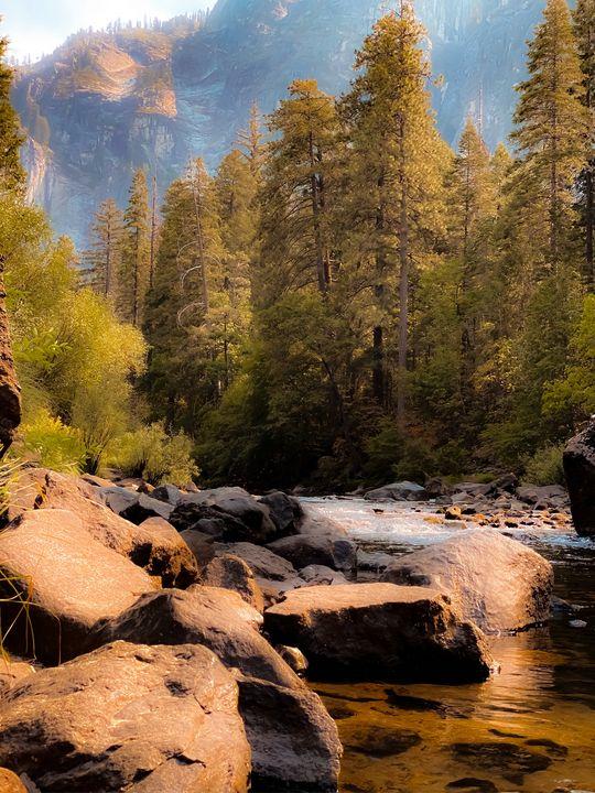 river and pine tree at Yosemite - TimmyLA