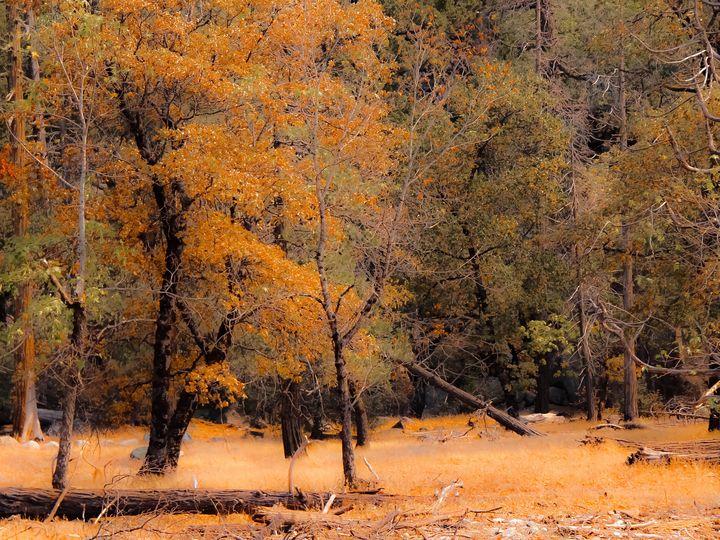Autumn tree at Yosemite - TimmyLA