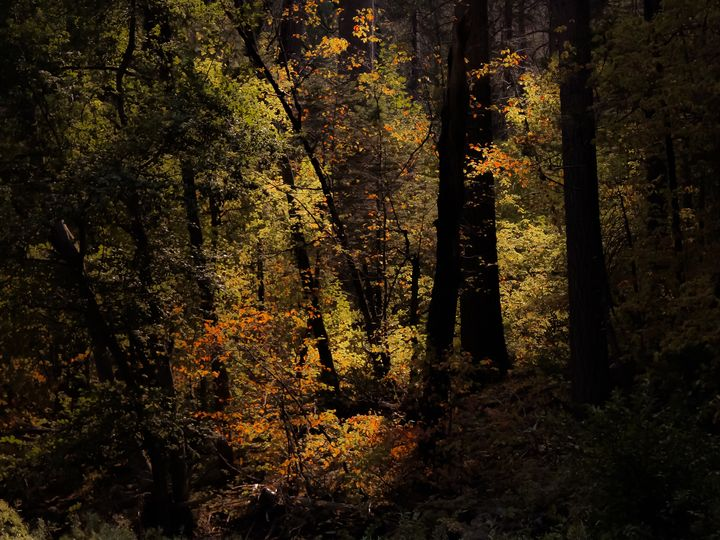 Autumn tree at Yosemite USA - TimmyLA