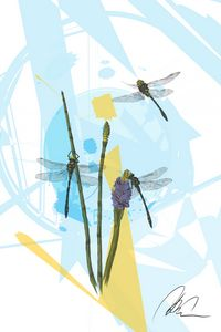 Dragonfly Project