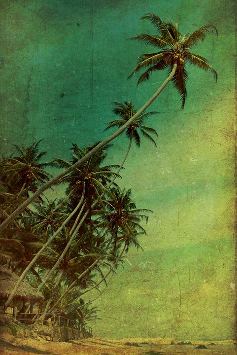 Tropical Vestige - Andrew Paranavitana Photography