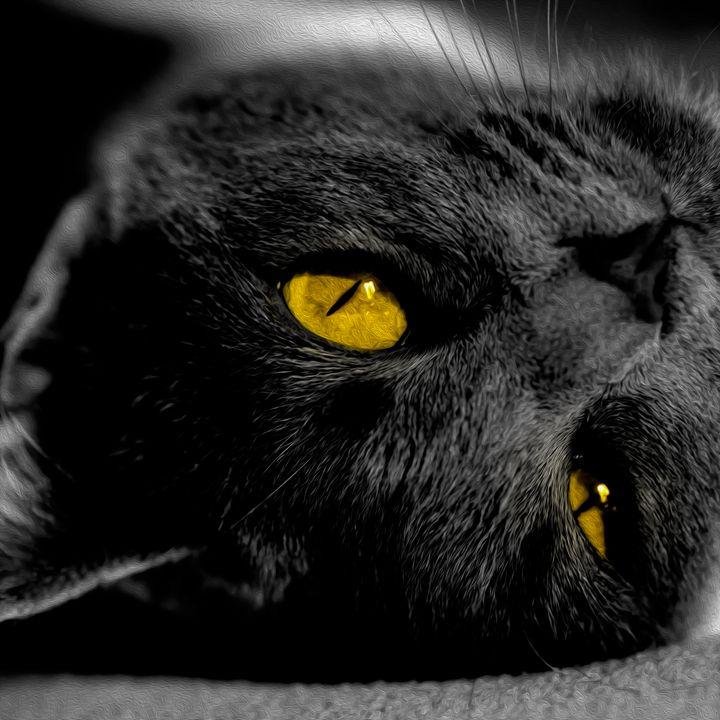 Painting Grey Kitten Yellow Eyes - Viper Visuals