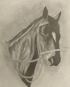 Black horse drawing