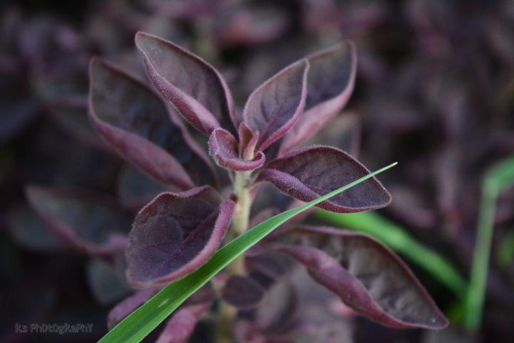 Purple colour flower - Rajat Shukla Photography