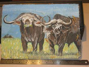 Buffalo Duo
