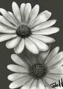 Grey Camomile flower - Jartndesign