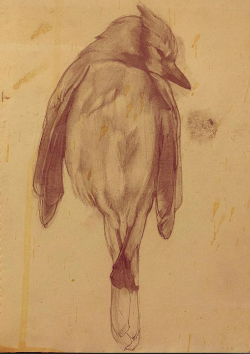 Bird - Johncschwartz.com
