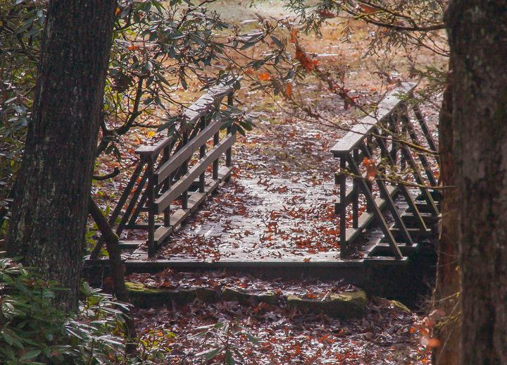 Foot Bridge in Leaves - StephenJSepan