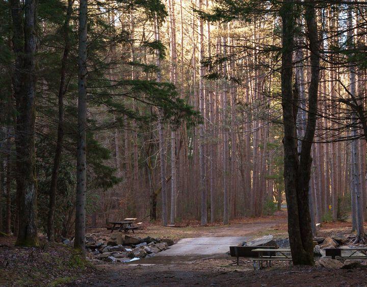 Picnic Area, Clear Creek - StephenJSepan