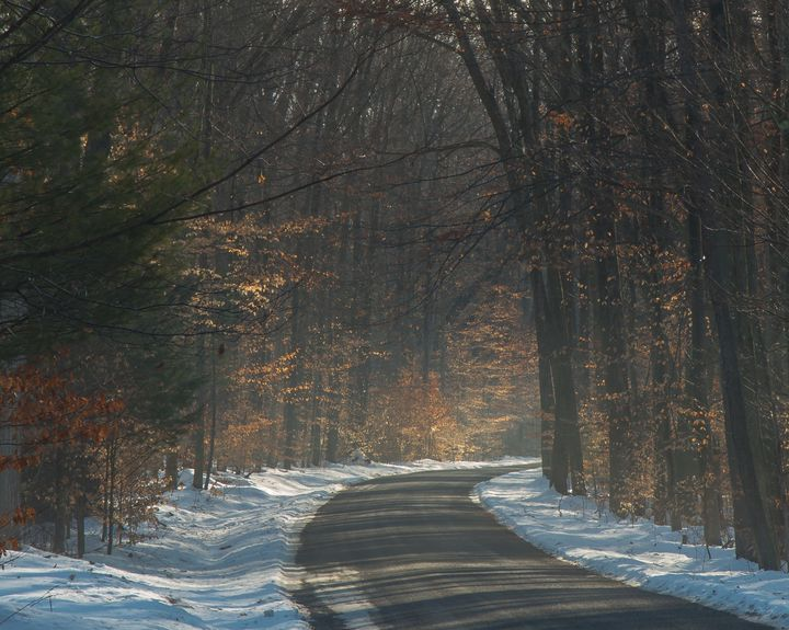 Maple Drive in Snow and Mist - StephenJSepan