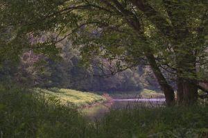 Clarion River near Blyson Run (OP)