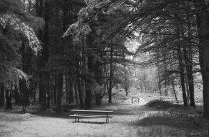 Picnic Bench in May Snowstorm