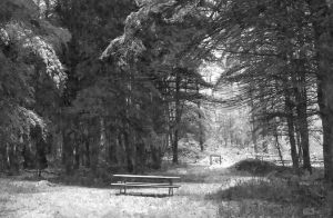 Picnic Bench in May Snowstorm (WC)