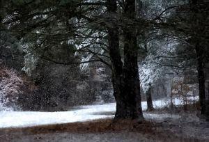 Fresh Snowfall in January (WC)