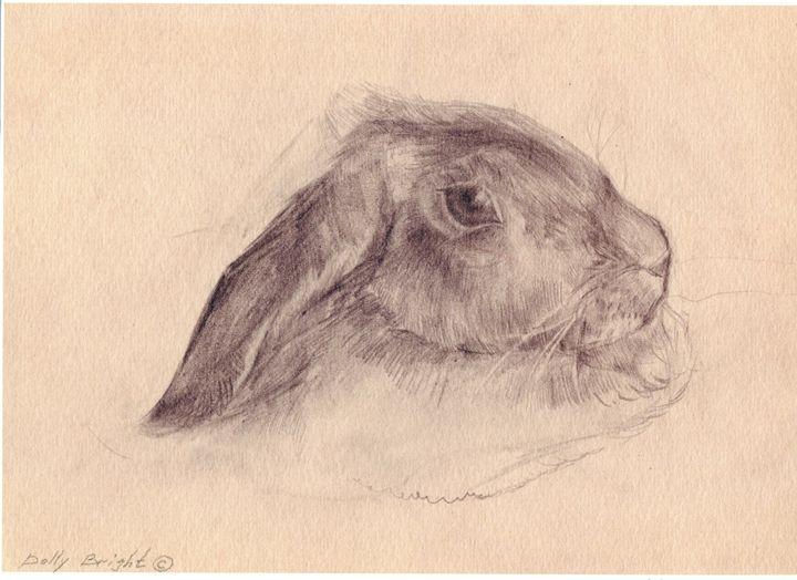 Rabbit - D. BRIGHT GALLERY