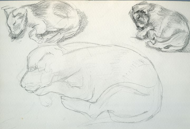 Puppy sketches / Illustration - D. BRIGHT GALLERY