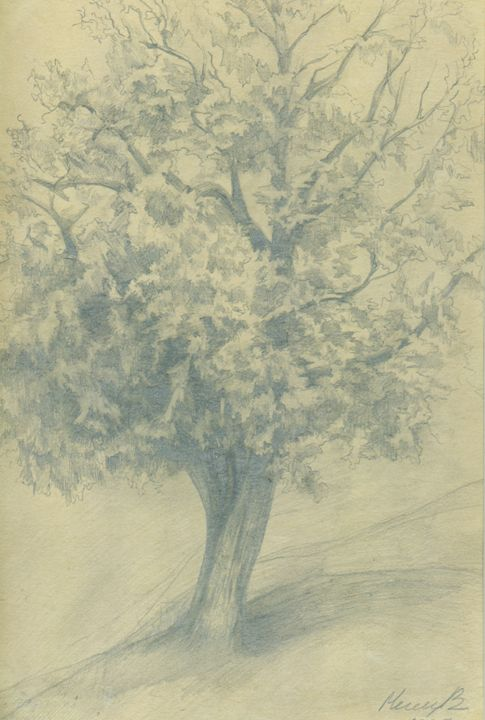 Hazelnut tree in a Fogy Day - D. BRIGHT GALLERY