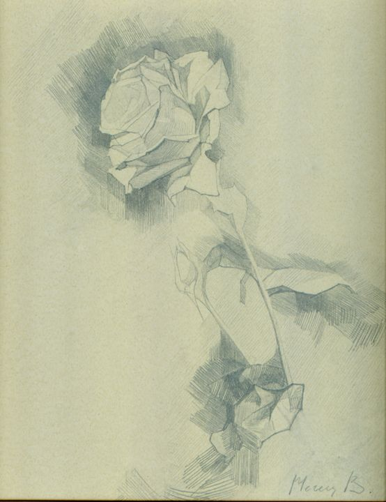 Rose bloom in a sketch - D. BRIGHT GALLERY