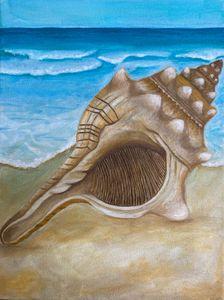 Conch seashell on shore