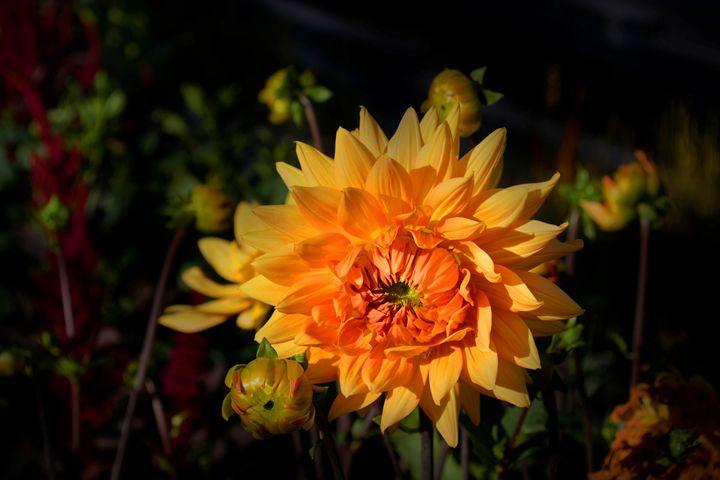 The yellow - Iren Darque