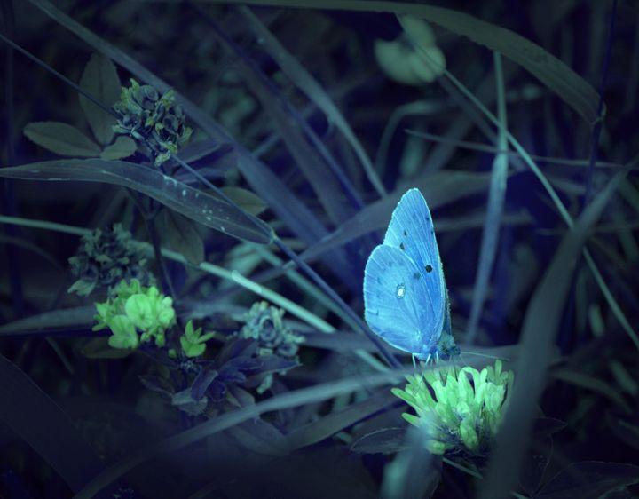 Buterfly - Iren Darque