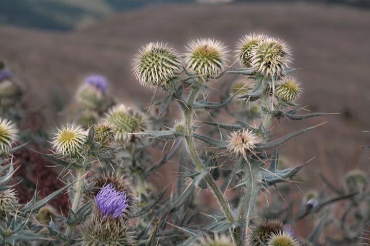 Desert flowers - Iren Darque