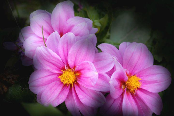 Flower fantasy - Iren Darque
