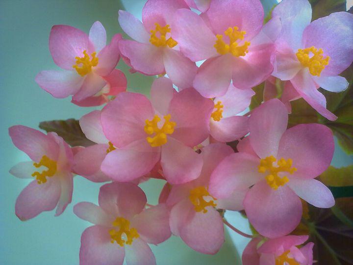 Dream flowers - Iren Darque