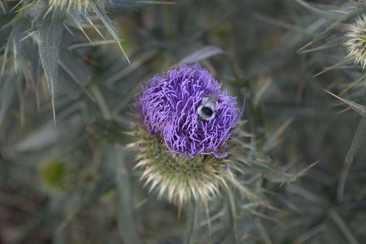 Bee - Iren Darque